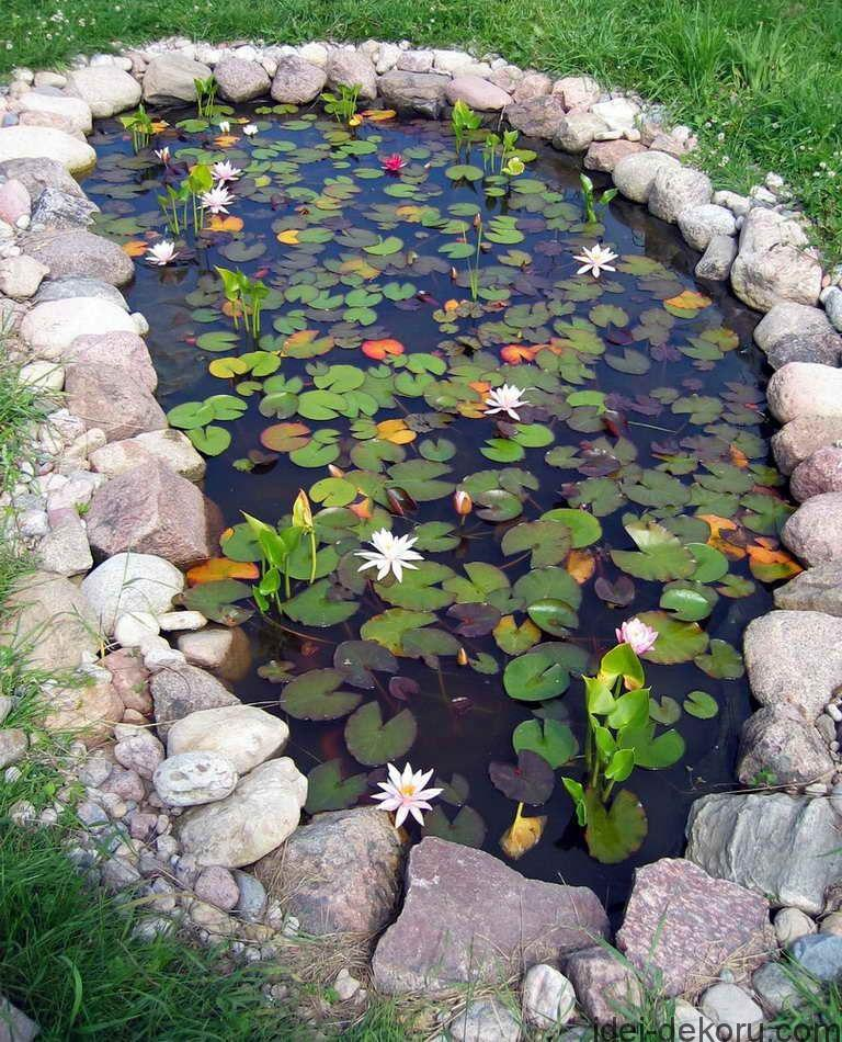 water lily pond stone