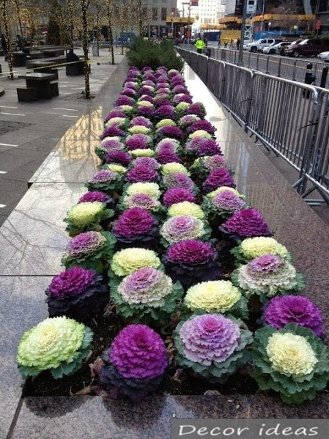 flowerbed decorative cabbage stone